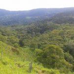 Tinamastes-property