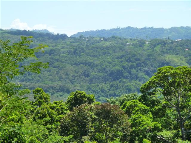 Natural Jungle In La Ceiba, Platanillo