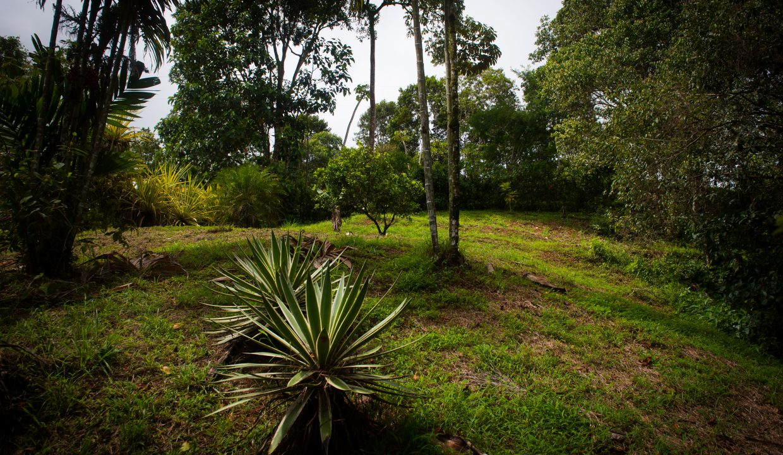 Finca Verde Lower Plantel Photos