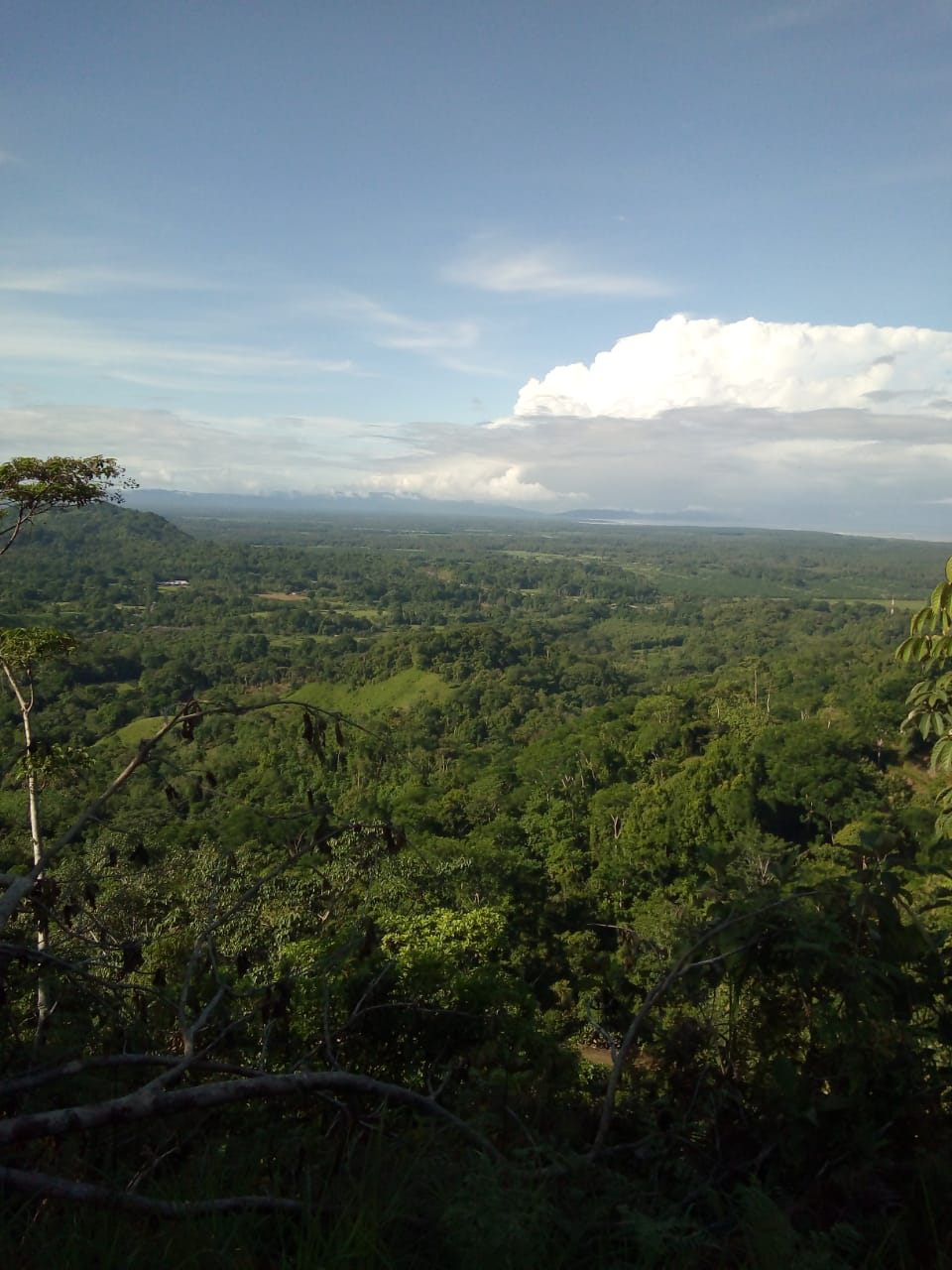 Sanbuenas 4 hectáreas with Ocean Views