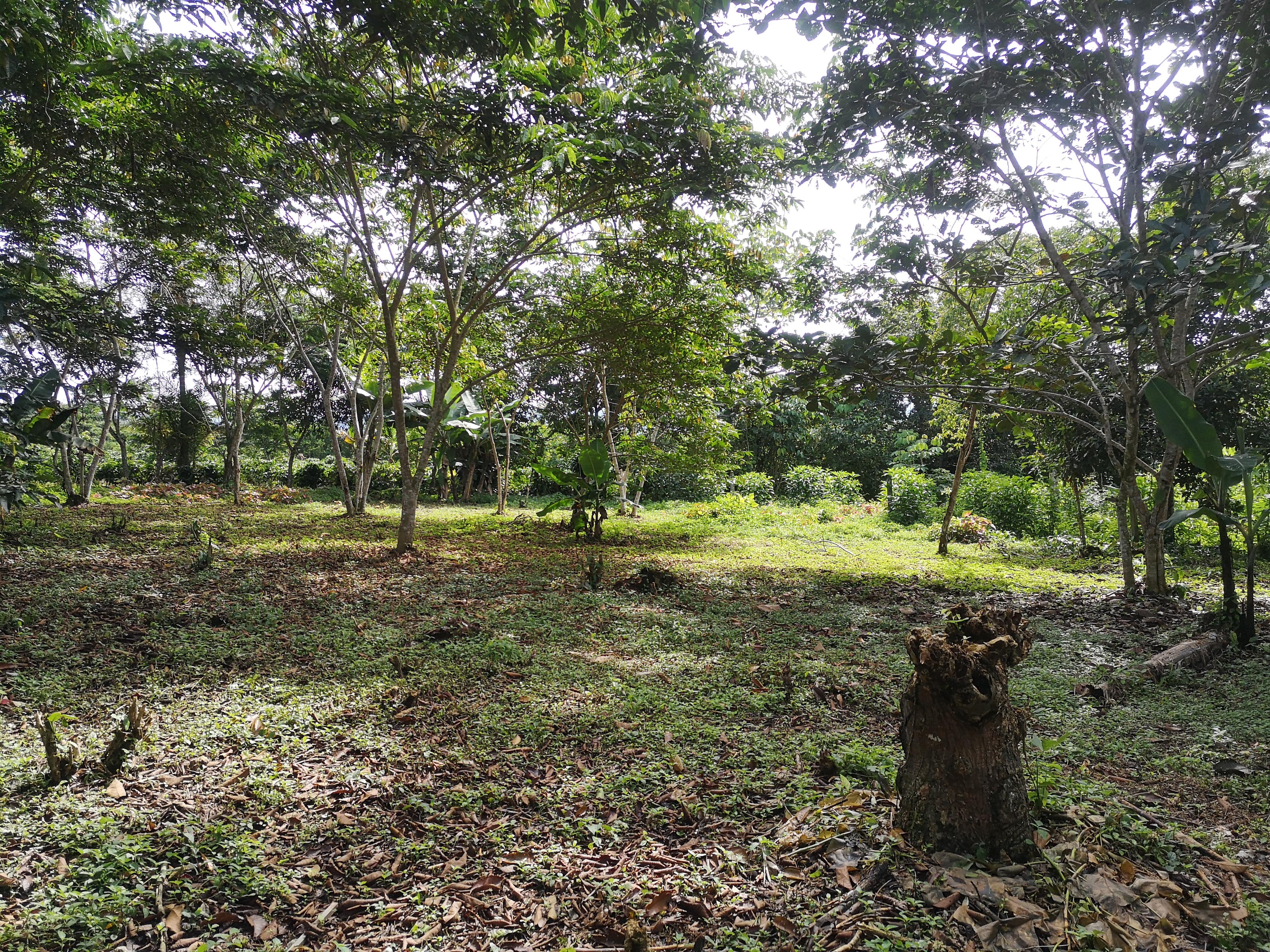 Flat lot in Cajon, Perez Zeledon