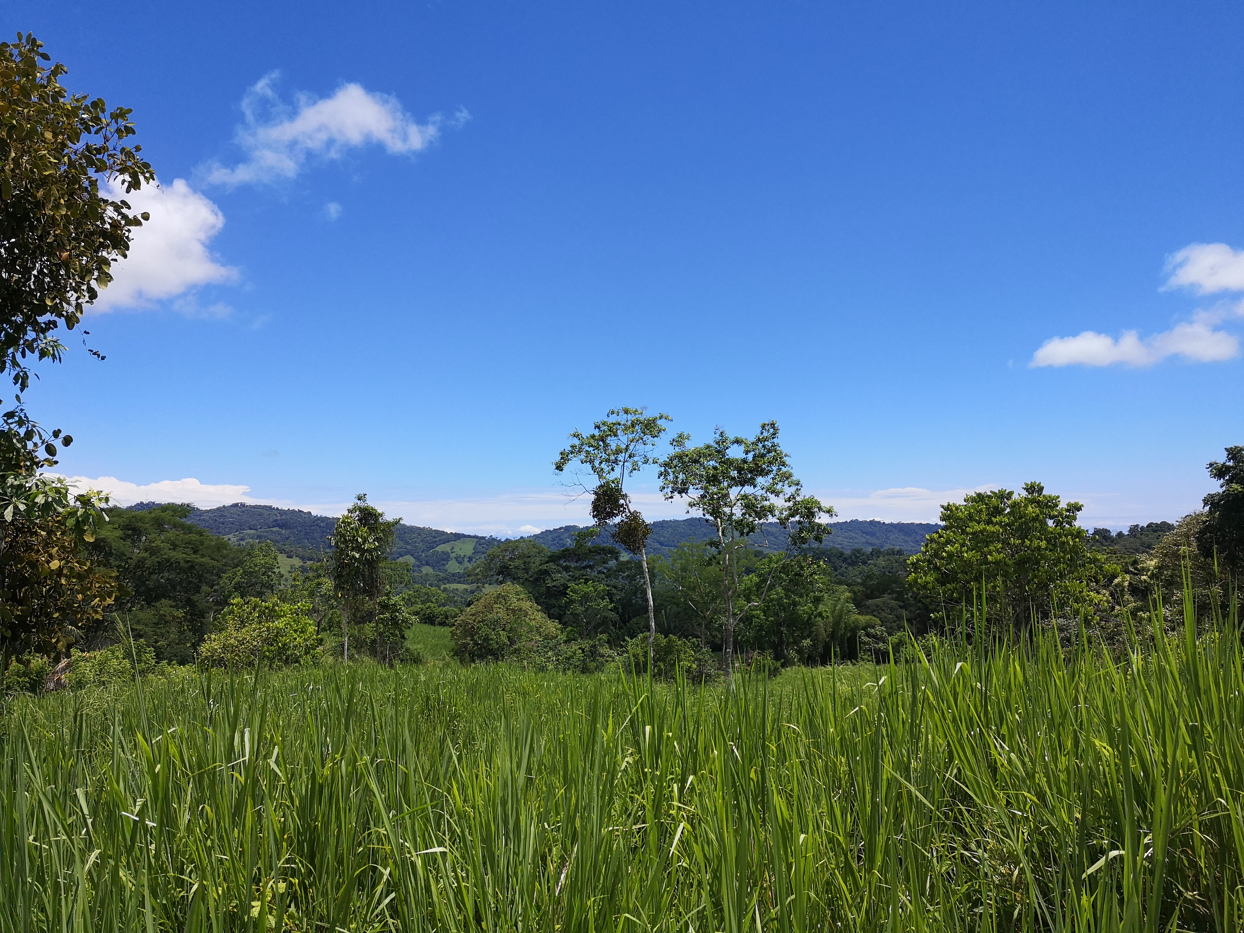 Beautiful property with 3 springs in Las Tumbas, Perez Zeledon