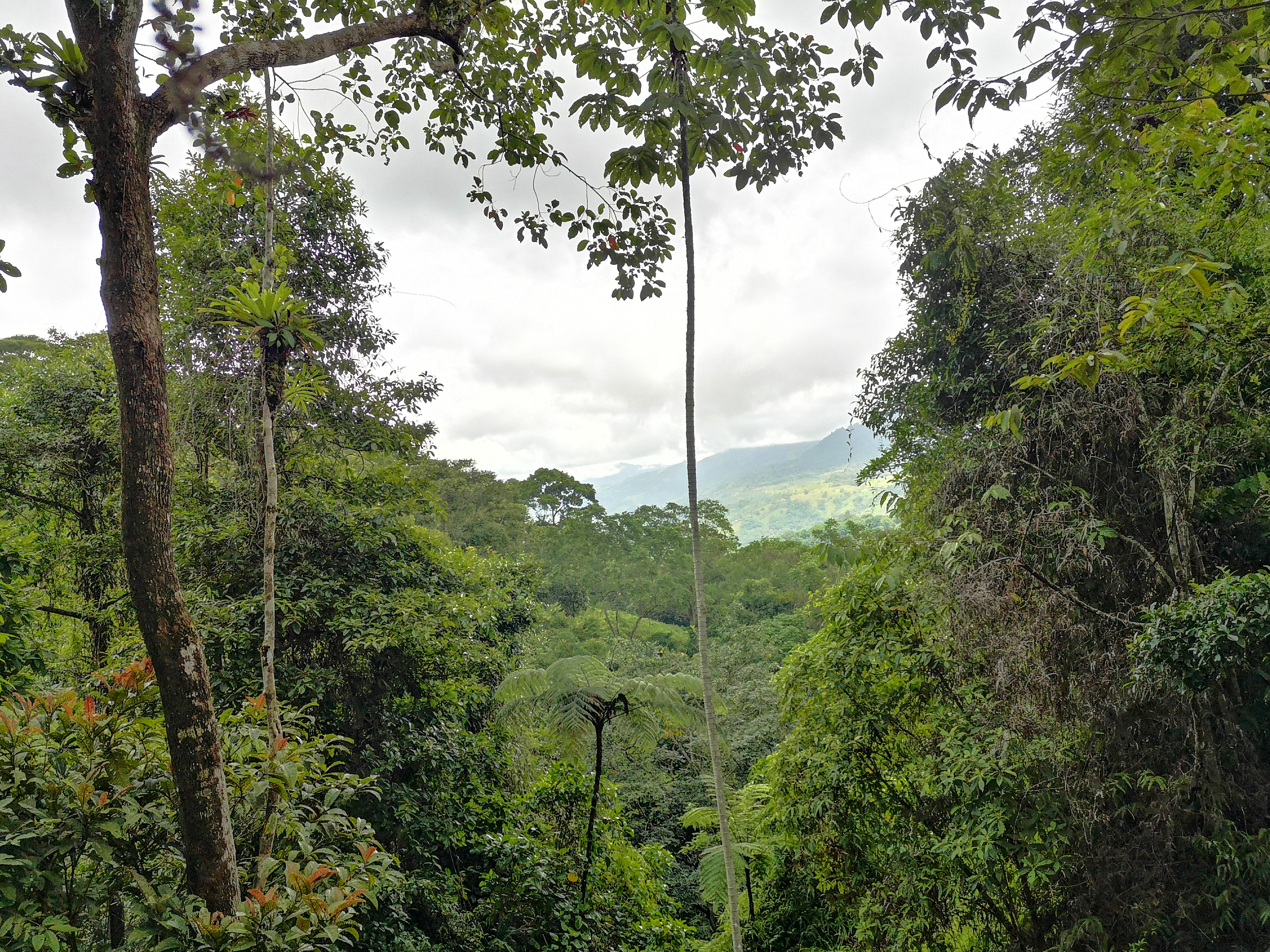 Lot with a creek on part of the property, La Alfombra, Perez Zeledon