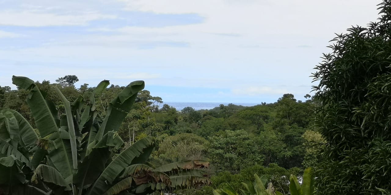 Uvita Lot 1/4 Acre walking distance to everything