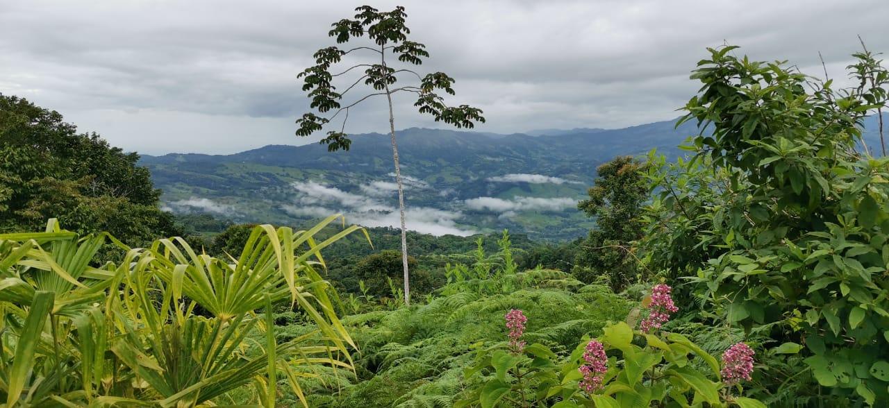22 acres (9 hectareas) con cabaña en la montaña