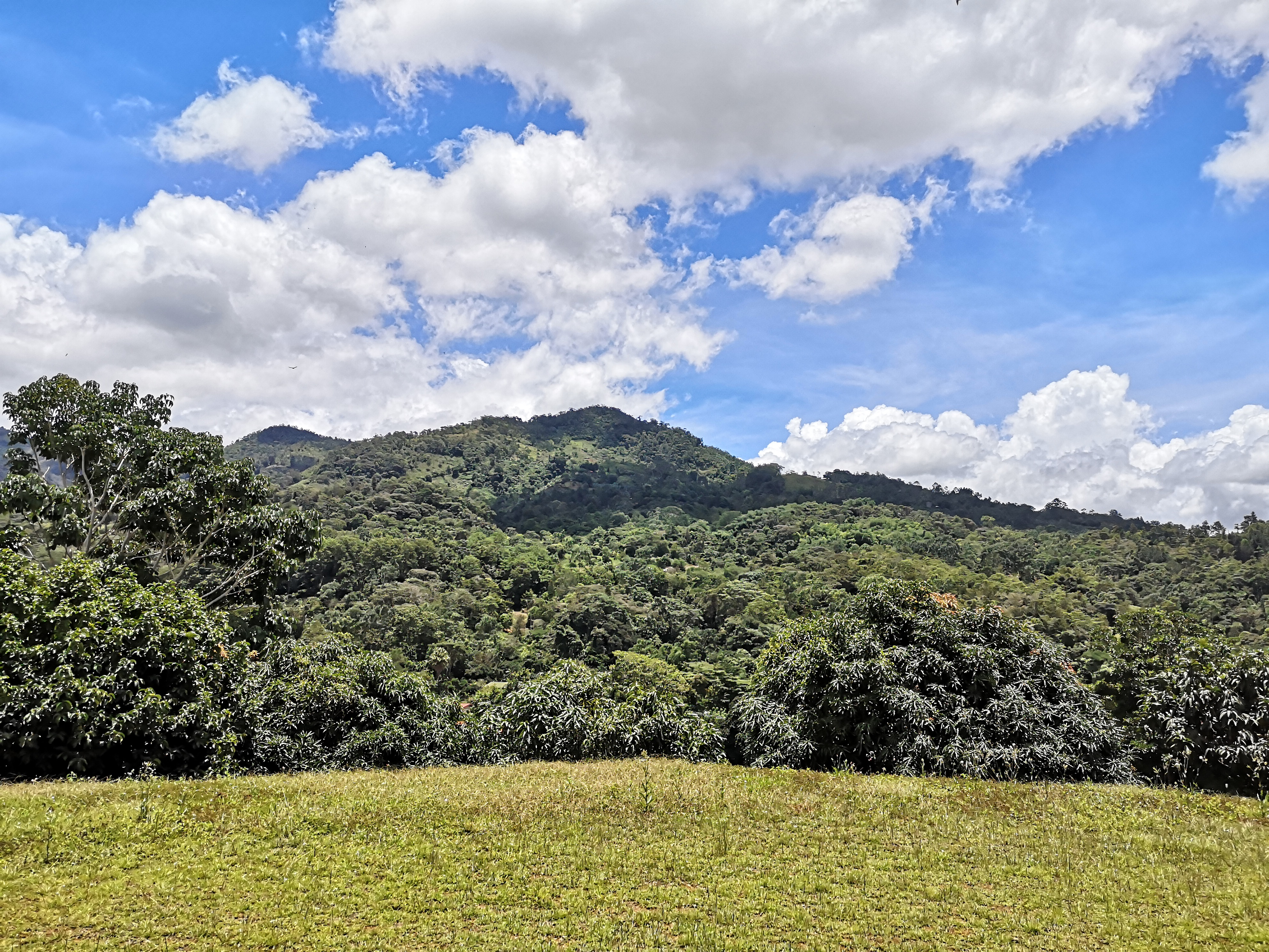 Beautiful property with fruits in production in Quebradas, Perez Zeledon
