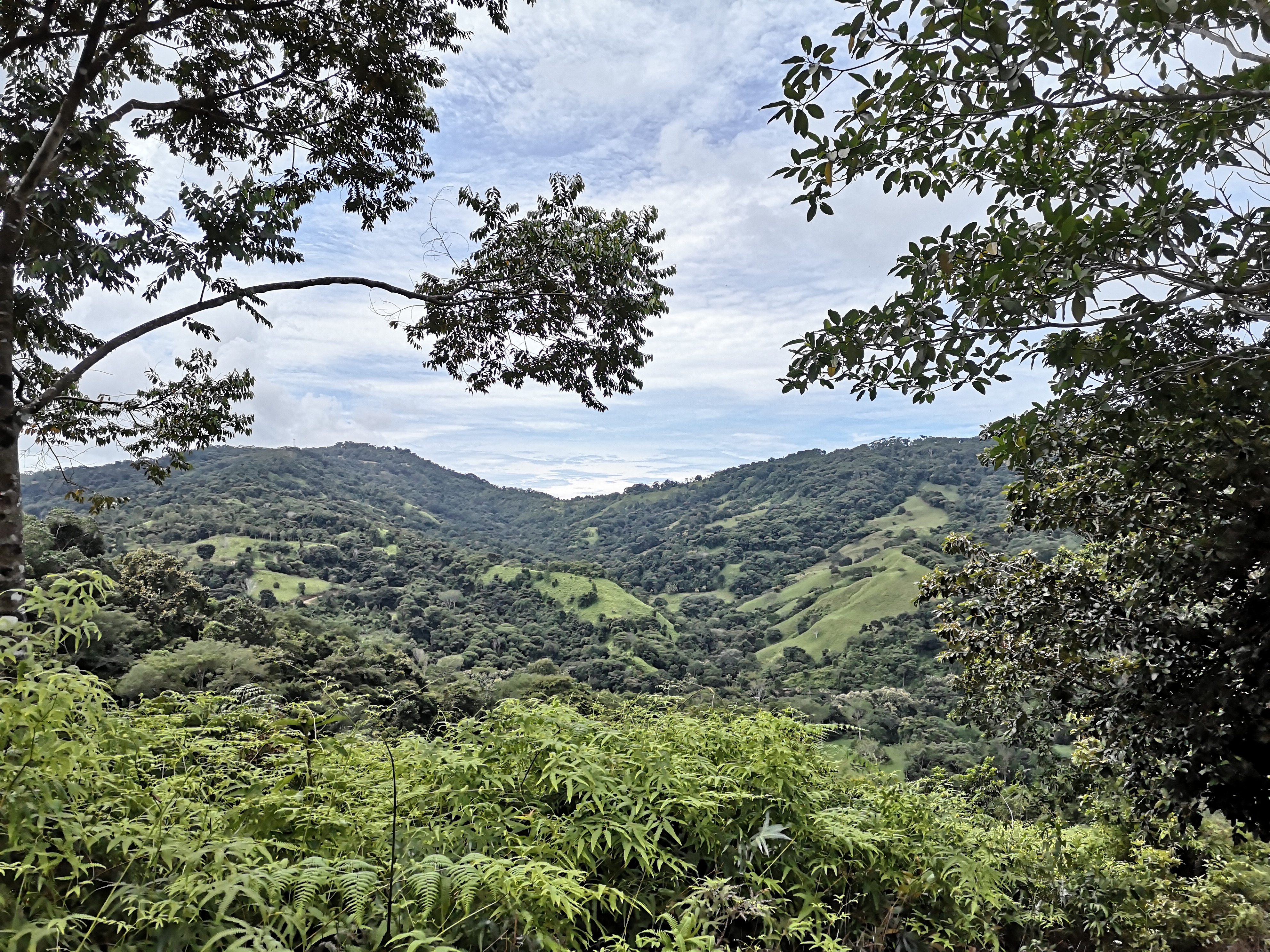 Property with fruit trees, spring and creek inside in Platanillo, Baru