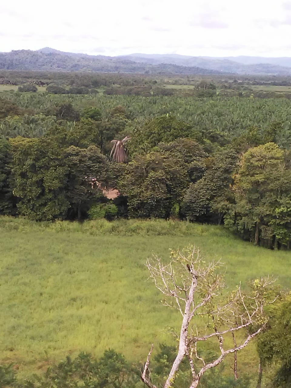 Beautiful farm ideal for cattle or a development in Palmar, Osa