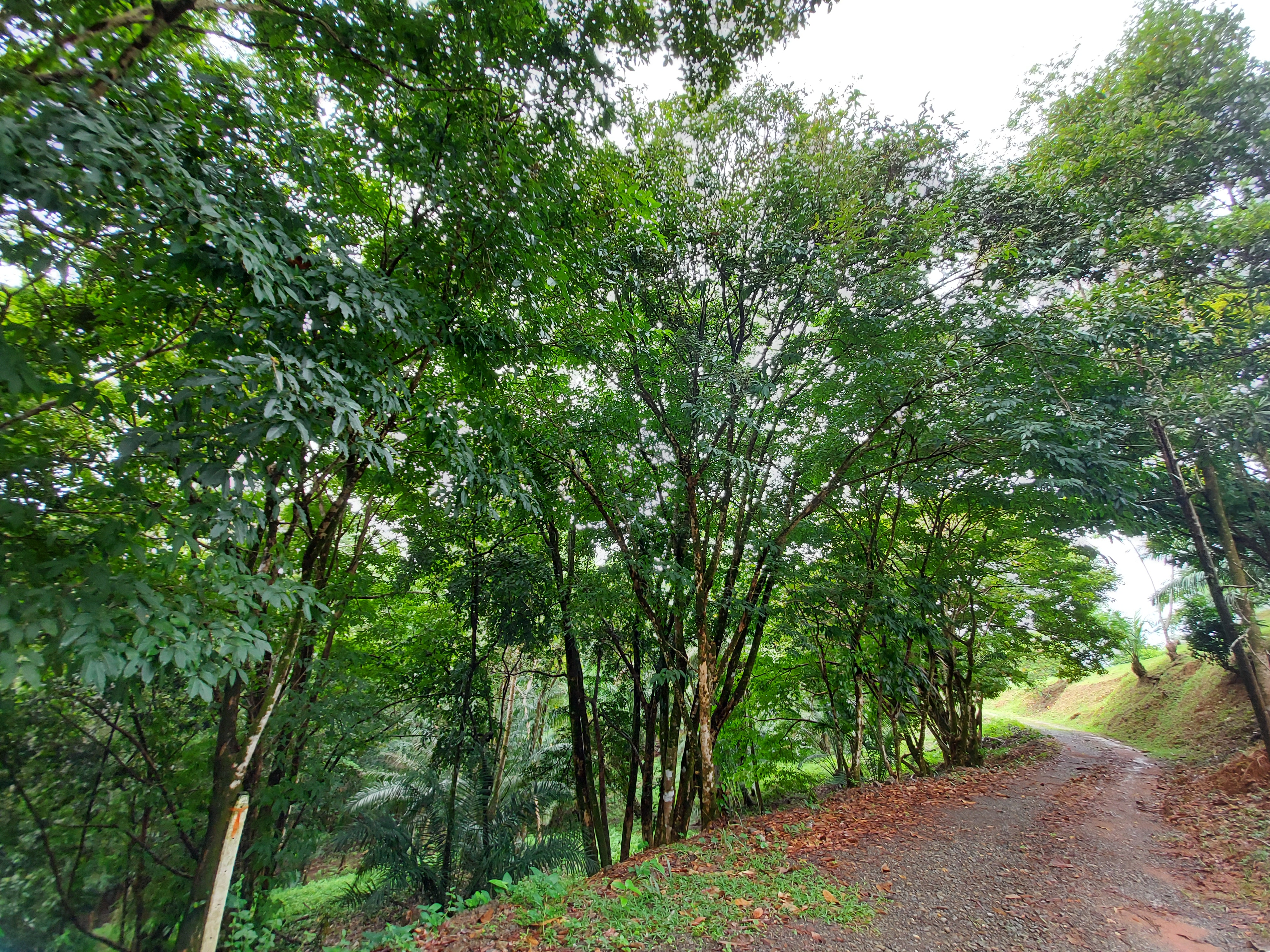 Land Steps Away from Uvita Town