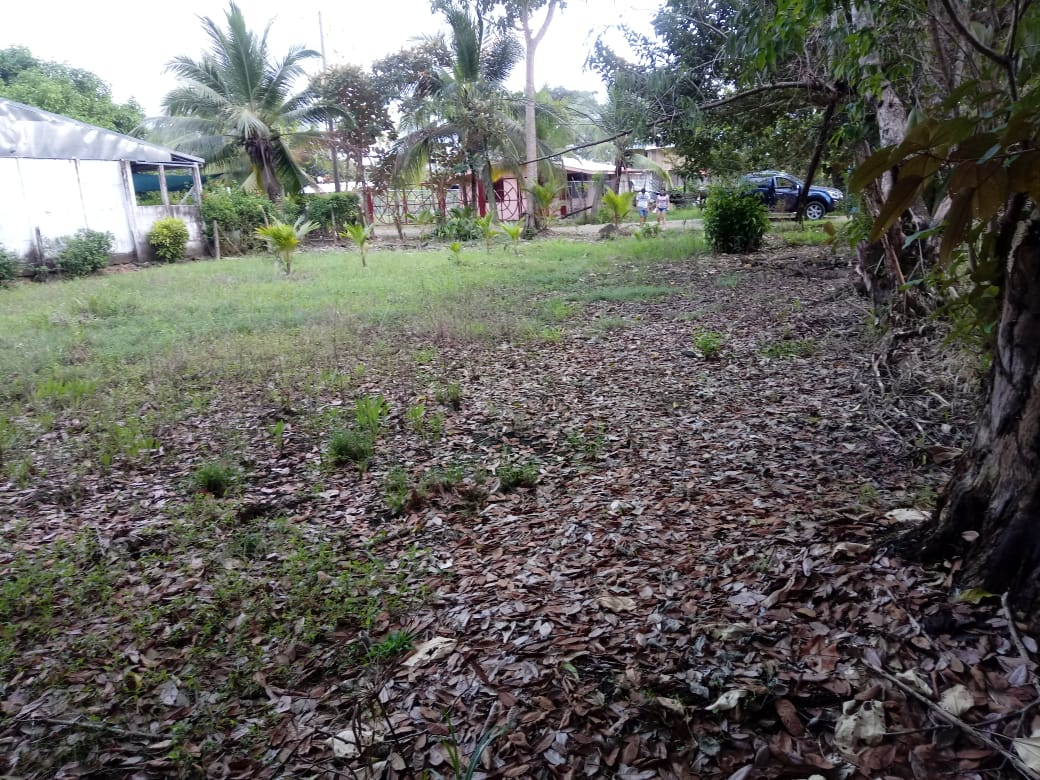 Flat land ready to build 5 minutes from the beach in Bahia Ballena, Uvita, Osa