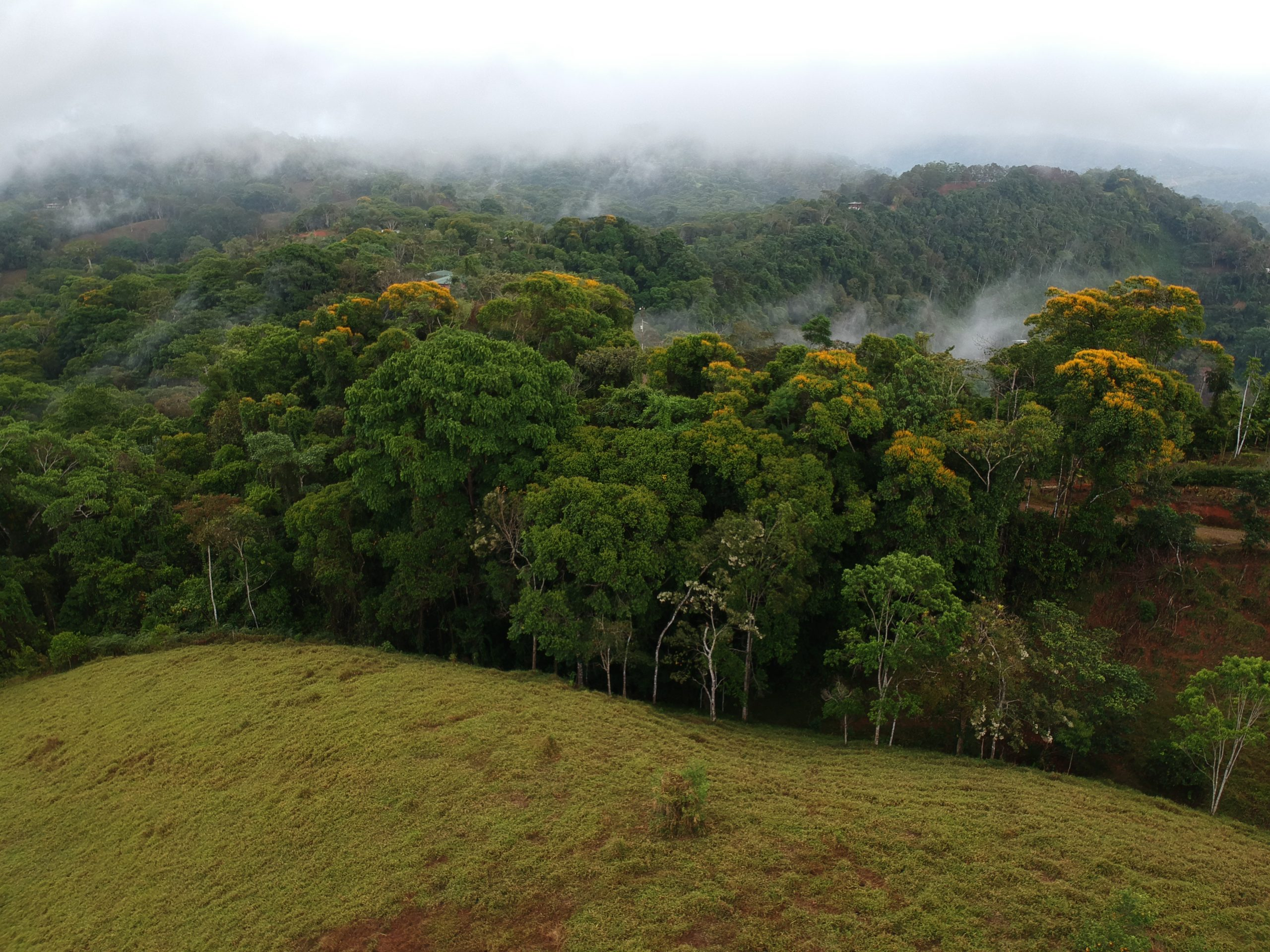 Land in Cacao